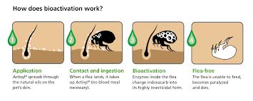 10 tips for flea tick treatment