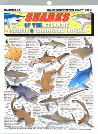 Shark Size Chart Tightline Publications Shark Identification Chart 1 Use For Saltwater Species At Www Outdoorshopping Com