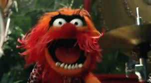 animal muppet drums gif. Brilliant Gif Animal Drummer GIF  Muppets GIFs Throughout Muppet Drums Gif