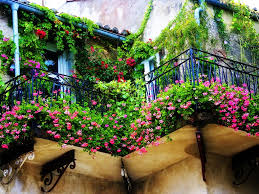Exterior:Fresh Green Plants Surround For Balcony Design Ideas With Black  Iron Railing Fence Cozy