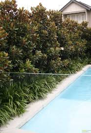 Evergreen Magnolia Hedge. Click for info on how to care for magnolias. |  Garden | Pinterest | Evergreen, Magnolia and Gardens