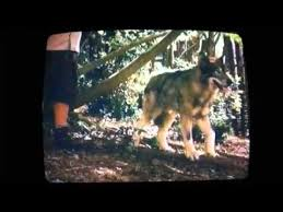 zookeeper movie wolf. Simple Zookeeper Funny Part In The Movie Zoo Keeper Also Shows Wolf Inside Zookeeper Movie Wolf YouTube