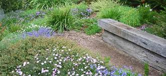 Small Picture Australian Native Garden Design Ideas Design Your Life
