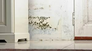 Schimmel In Der Wohnung Wie Die Pilze Entstehen Und Wie Man Sie