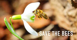 World Honey Bee Day: Saving the Bees