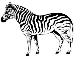 Small Picture Zebra Coloring Page 983 600453 Free Coloring KIDS Area