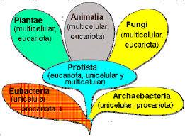 Esquema actual, basado en los principios de Margulis y Schwartz (1988),...  | Download Scientific Diagram
