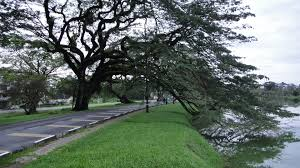 Image result for taiping lake gardens