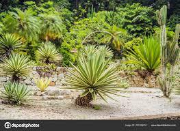 Cactus Succulent Landscape Design Park Cactus Succulent Plants Close Small Spotted Cactus