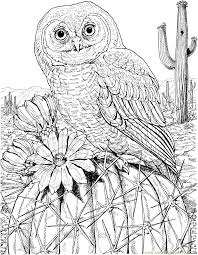 Mexican Spotted Owl On Cactus Coloring