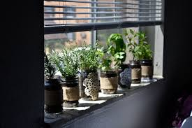 how to make an indoor herb garden. Upside Down Growing Is Quite Unusual But It S A Cool Idea For Small Indoor Herb How To Make An Garden J