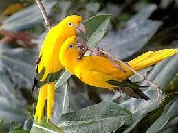 Yolanda vander Zee on Twitter   Beautiful birds, Most beautiful birds,  Beautiful bird wallpaper