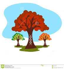 Genetic Family Tree Genetic Family Tree History Stock Vector Illustration Of Clipart