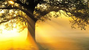 Tree wallpaper to use as background-