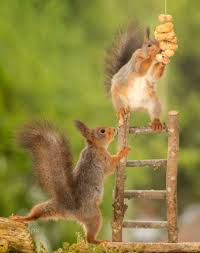 inspirational yes that one red squirrel standing on stairs with peanuts and a chipmunk house plans