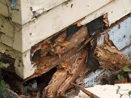 Tips For Handling Wood Dry Rot Problems