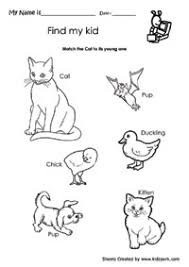 kid4_cat science practice magnet worksheet,evs activity sheets,school on grade 1 science worksheets