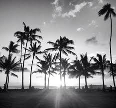 Simple Palm Trees Tumblr Black And White Find This Pin More On By Throughout Design Inspiration