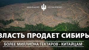 Картинки по запросу Вырубка лесов в сибири