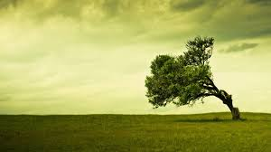 free tree wallpaper for phone high definiton wallpapers desktop images windows 10 backgrounds amazing free