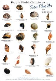 Roys Field Guides Birds Fish And Sea Shells To Be Found