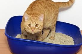 image cat litter. Cat Owners Served By Valley Waste Resource Management (VWRM) In Nova Scotia  Now Have The Option Of Putting Used Kitty Litter Green Compost Bin. Image Cat T