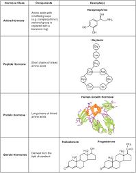 Hormone Wikipedia