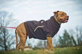picture of canine carhartt coat for your pal