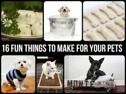 Easy Things To Make Fun Things To Make For Your Pets