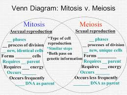 Venn Diagram Meiosis And Mitosis Mitosis Flipbook Quiz 1 Mitosis Results In __ Genetically