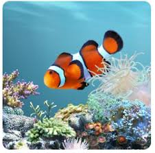apple iphone live wallpaper for android. aquarium live wallpaper android apple iphone for