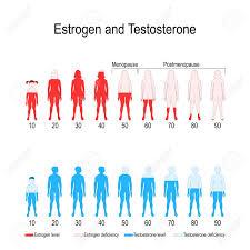 Estrogen And Testosterone Hormone Levels Chart Vector Diagram