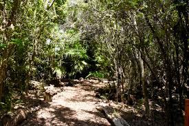 key west tropical forest and botanical gardens lush gardens rare plants
