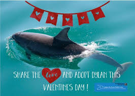 cbmwc news on twitter looking for a unique gift to give a loved one this valentine s day adopt a dolphin with us and help to share the love by
