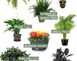 best low light office plants. Office Plant No Sunlight Low Light Plants Adorable Best Indoor Amazing .