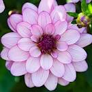 The 25  best Flowers ideas on Pinterest   Bridal flower bouquets ...