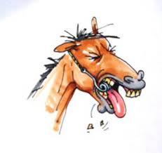 zahnfistel pferd