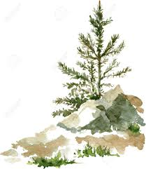 vector young pine trees and rocks drawing by watercolor aquarelle sketch of wild nature painting forest hand drawn vector ilration