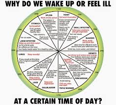 Why Do We Abruptly Wake Or Feel Ill At Certain Time Of The
