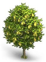 Картинки по запросу грушевое дерево