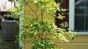 xeriscape grow green sustaility