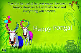 happy pongal messages of greetings and wishes techicy happy pongal messages 2016
