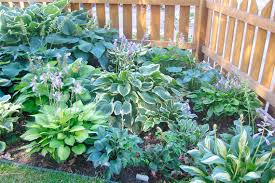 Small Picture Perennial Flower Garden Ideas decorating clear