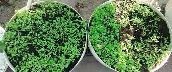 own veggies without mining soil