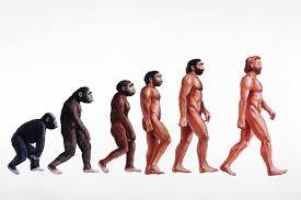 Evolution Of Man Chart Gradualism Vs Punctuated Equilibrium
