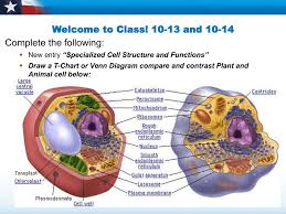 Cell Structure Function Chart Cell Structures And Functions 10 12 And 10 13