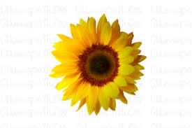 Collection by design bundles | cricut svg files & graphic design resources • last updated 4 graphic design store. 4 Sublimation Sunshine Designs Graphics