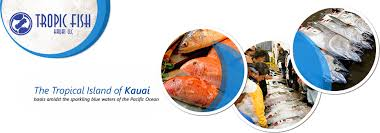 Seafood Yield Chart Tropic Fish Kauai Llc Product Chart