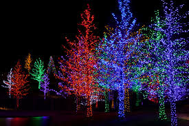Two Weekends Left To See The Lights In Bloom