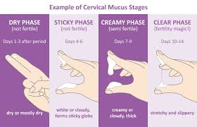 Cervical Mucus Chart Example Natural Family Planning Easy Home Fertility